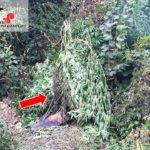 160902 comunicato (coltivazione di cannabis) - dettaglio del tentativo di dare fuoco alle piante