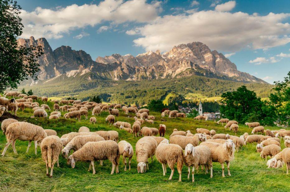 Cortina d'Ampezzo Plastic Free: l'ordinanza del Comune di Cortina d'Ampezzo e le realtà locali
